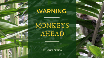 monkeys ahead-3